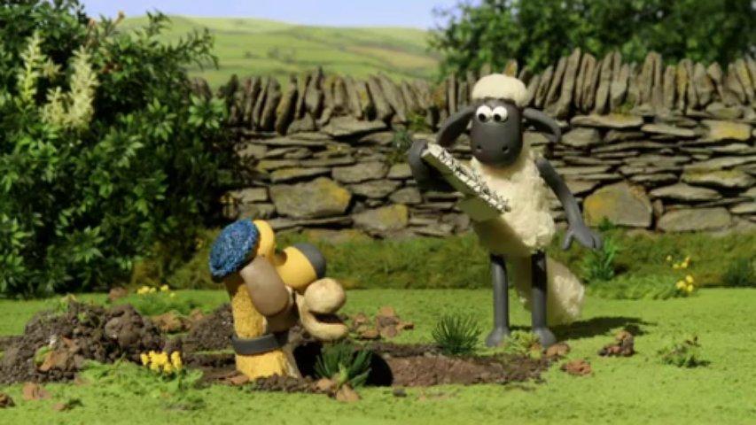 Ovečka Shaun  - Kohút a líška