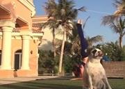 Yoga a zvieratá