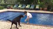 Psy majú radi vodu