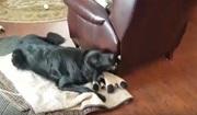 Mačky a psy