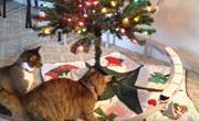 Vianočné faily