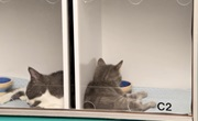 Dieťa a automat na mačky