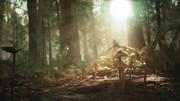 Morels: The Hunt ukazuje romantické zábery z prírody