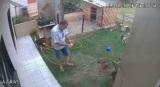 Keď chcete vyhnať krtkov zo záhrady