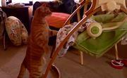 Keď sa mačky správajú ako ľudi