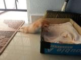 Moja mačka sa asi pokazila