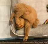 Psom je jedno ako zaspia